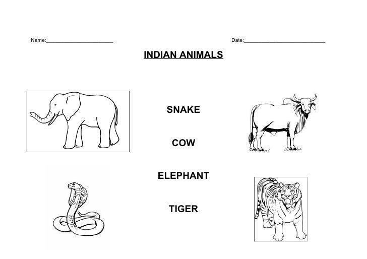 Indian Animals
