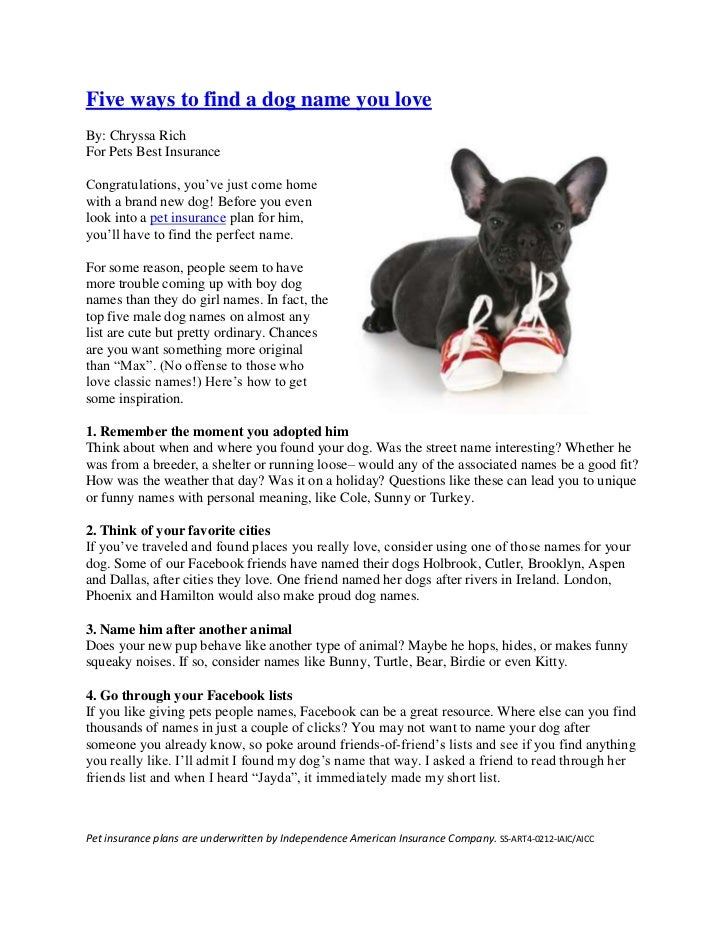 """Five ways to find a dog name you loveBy: Chryssa RichFor Pets Best InsuranceCongratulations, you""""ve just come homewith a b..."""