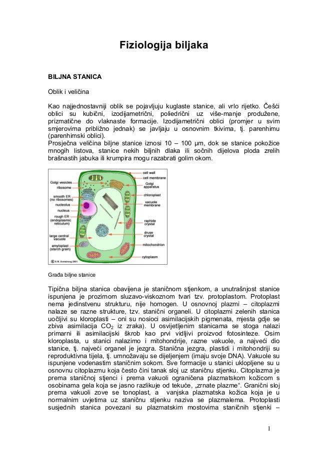 Fiziologija biljakaBILJNA STANICAOblik i veličinaKao najjednostavniji oblik se pojavljuju kuglaste stanice, ali vrlo rijet...