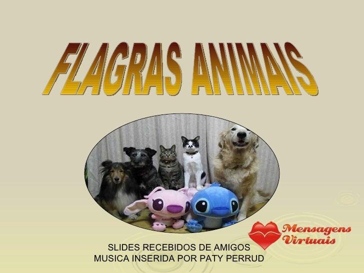 FLAGRAS ANIMAIS SLIDES RECEBIDOS DE AMIGOS MUSICA INSERIDA POR PATY PERRUD