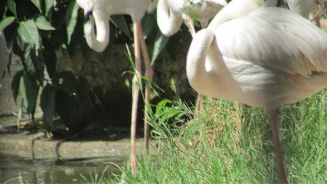 The Flamingo bird in Egypt
