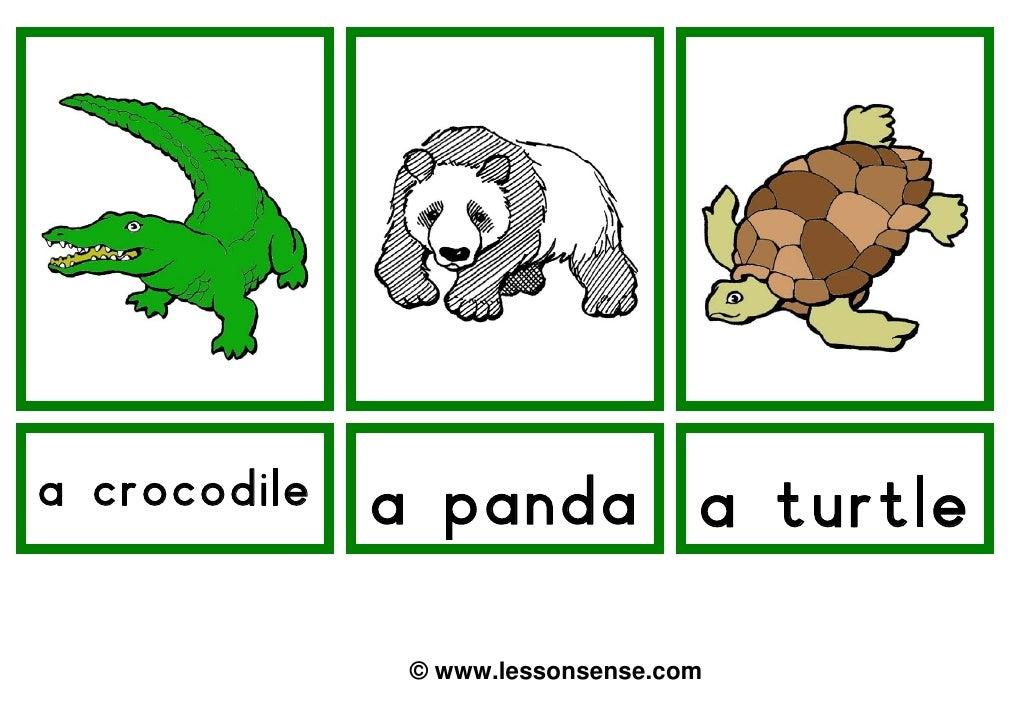 a crocodile   a panda a turtle               © www.lessonsense.com