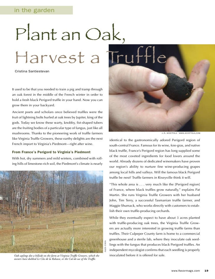 in the garden      Plant an Oak,   Harvest a Truffle   Cristina Santiestevan     It used to be that you needed to train a ...