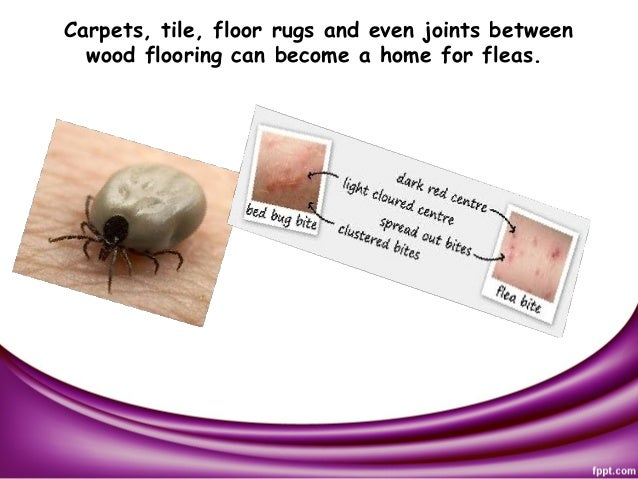 Flea and tick control for Wood floor joint guard