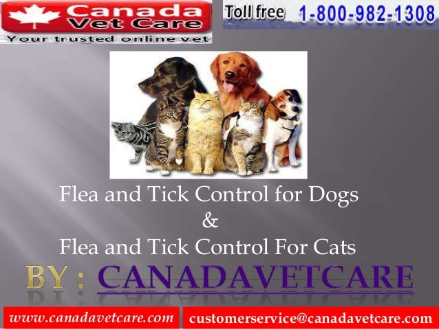 Flea and Tick Control for Dogs and Cats