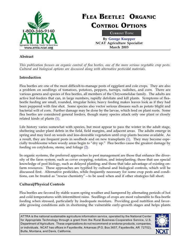 Flea Beetle: Organic Control Options