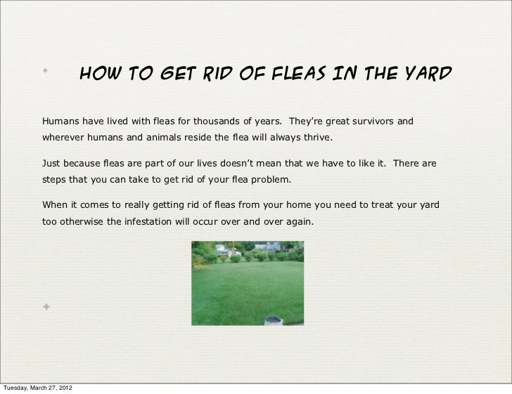 How To Get Rid Of Fleas In Your Yard