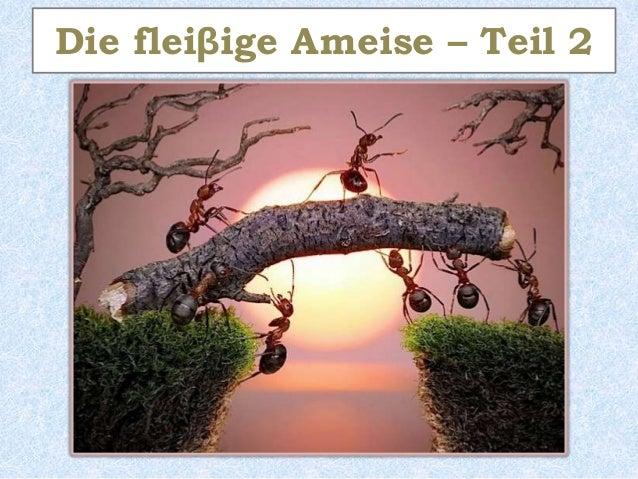 Die fleiβige Ameise – Teil 2