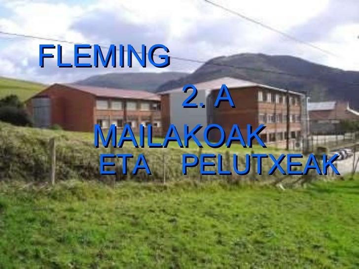 FLEMING  2. A  MAILAKOAK   ETA  PELUTXEAK