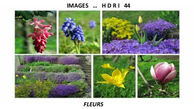 IMAGES … H D R I 44 FLEURS
