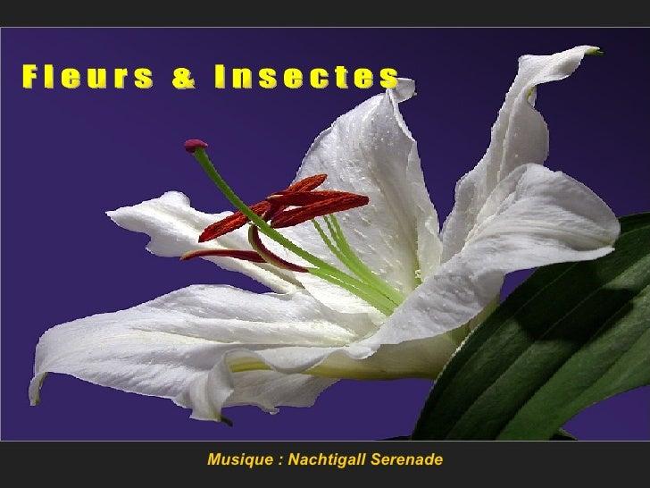 Fleurs Insectes
