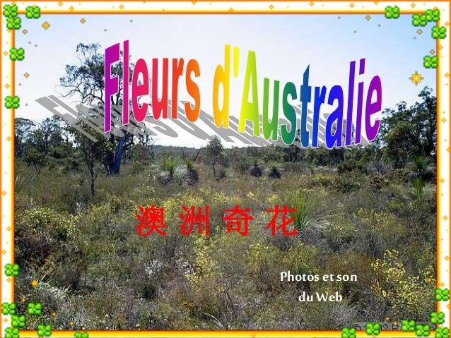 Photos et son  du Web  澳洲奇花