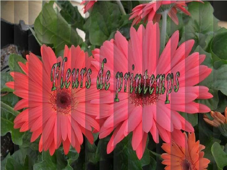 Fleurs De Printemps - Charlotte2