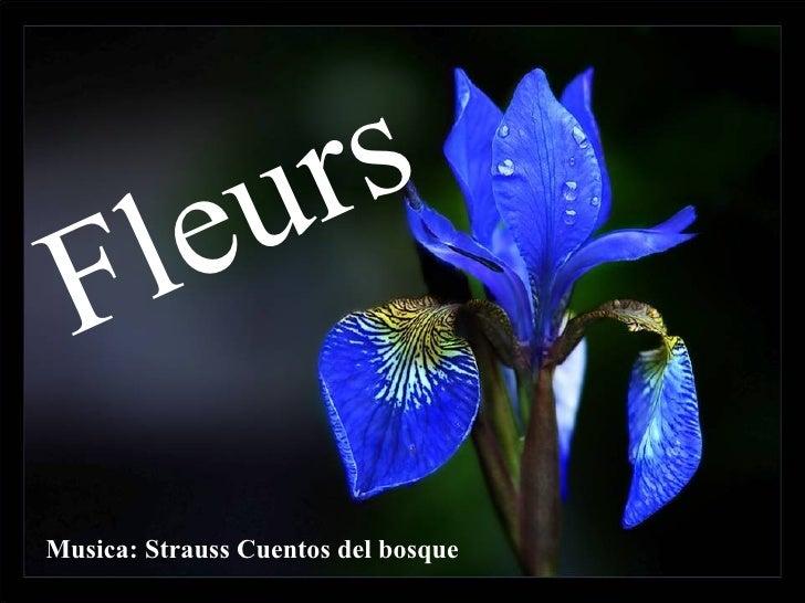 Musica: Strauss Cuentos del bosque Fleurs