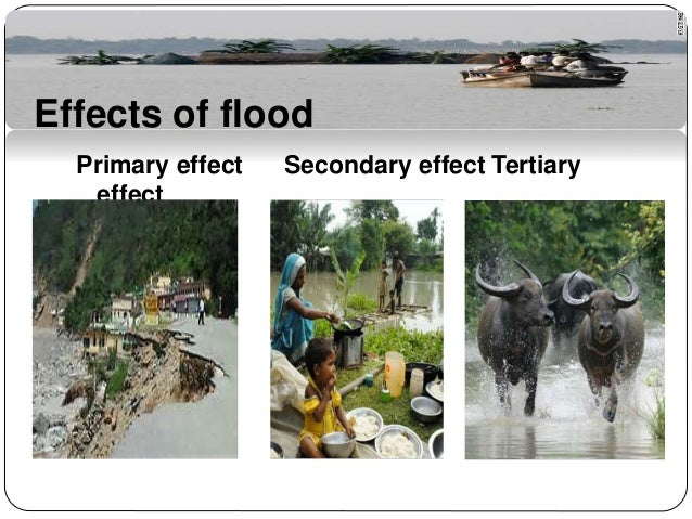 cause and effect flooding essay To help you get started, here are 22 cause and effect essay topics to help you write a better essay a quick overview in order to write a good cause and effect essay, first decide if you'll write about causes, effects, or causes and effects.