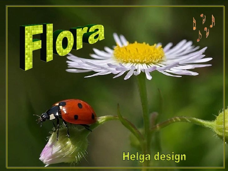 Flora Helga design