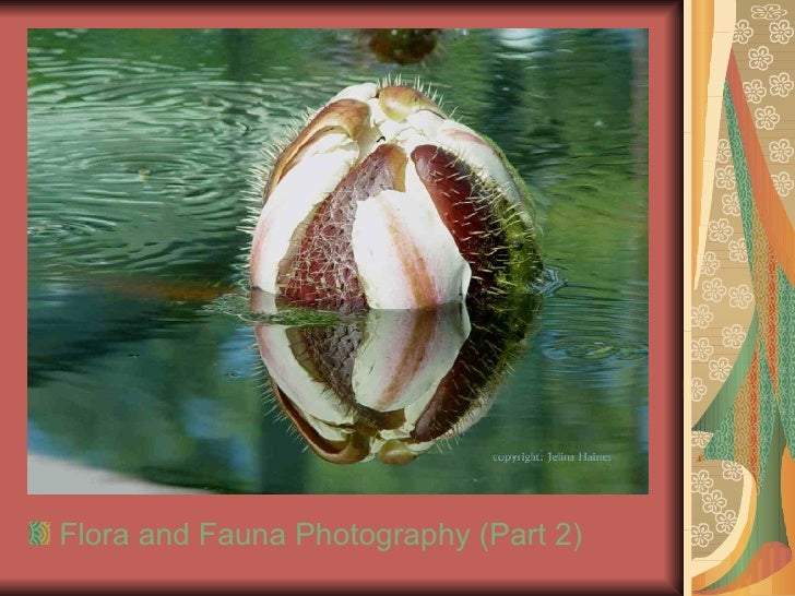 <ul><li>Flora and Fauna Photography (Part 2)  </li></ul>