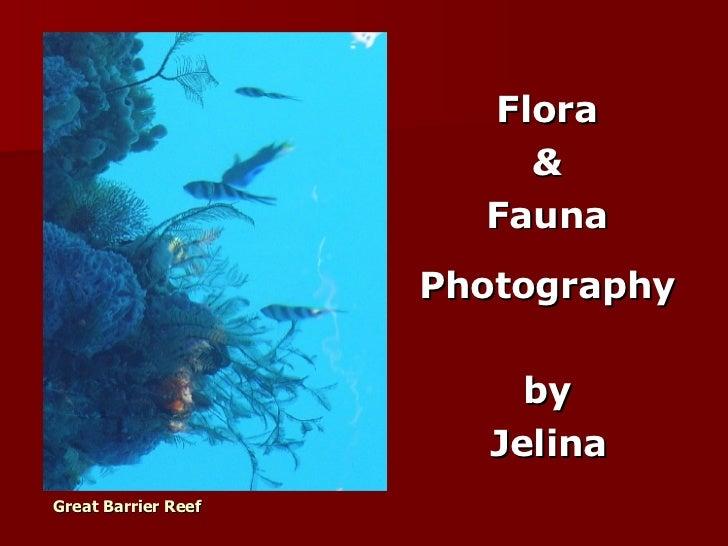 Great Barrier Reef   <ul><li>Flora  </li></ul><ul><li>&  </li></ul><ul><li>Fauna  </li></ul><ul><li>Photography  </li></ul...