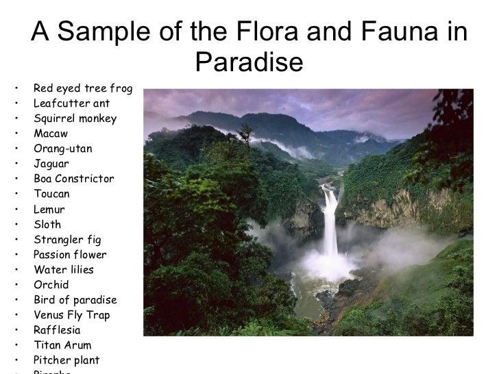 A Sample of the Flora and Fauna in Paradise <ul><li>Red eyed tree frog </li></ul><ul><li>Leafcutter ant </li></ul><ul><li>...