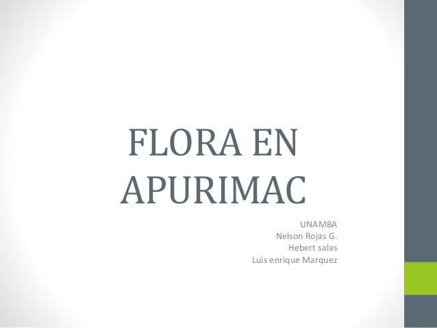 FLORA EN  APURIMAC  UNAMBA  Nelson Rojas G.  Hebert salas  Luis enrique Marquez