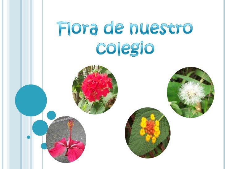 Flora De Mi Colegio¡¡¡