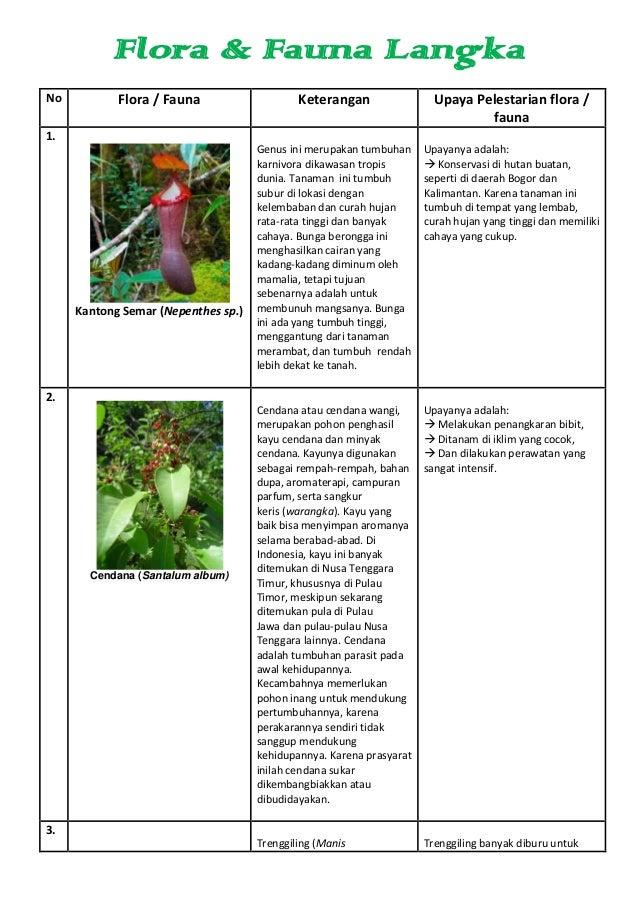Flora & Fauna LangkaNo Flora / Fauna Keterangan Upaya Pelestarian flora /fauna1.Kantong Semar (Nepenthes sp.)Genus ini mer...