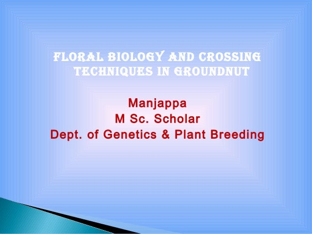 Floral biology and crossing techniques in groundnut Manjappa M Sc. Scholar Dept. of Genetics & Plant Breeding