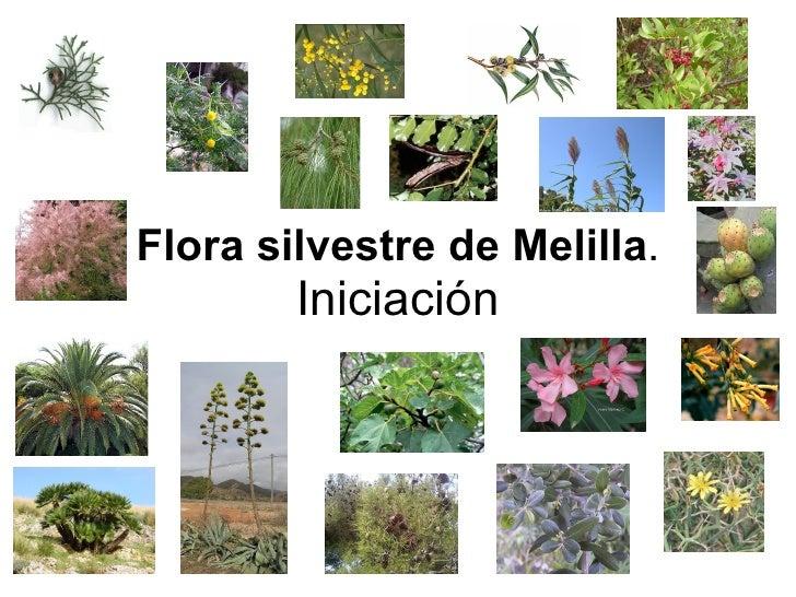 Flora silvestre de Melilla .  Iniciación