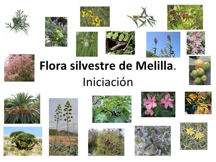 Flora Silvestre De Melilla. IniciacióN