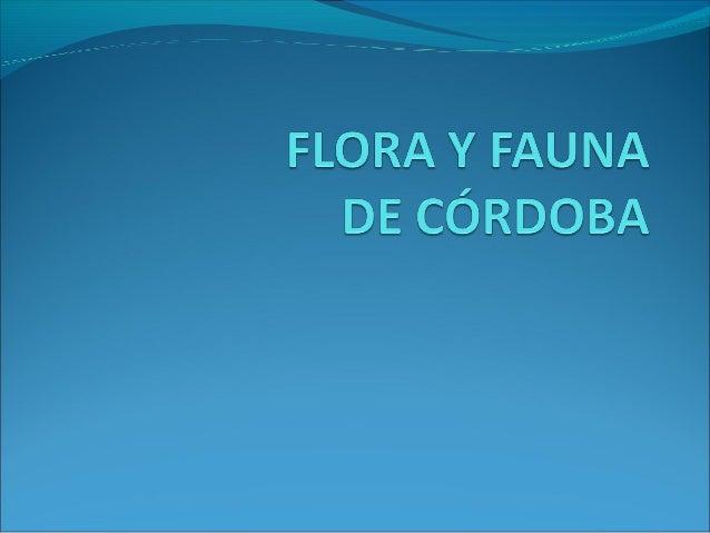 La flora en imágenes                  PAJA DE LAS JUNQUILLO         ORTIGUILLA         VIZCACHERAS        PASTOS COLORADOS...