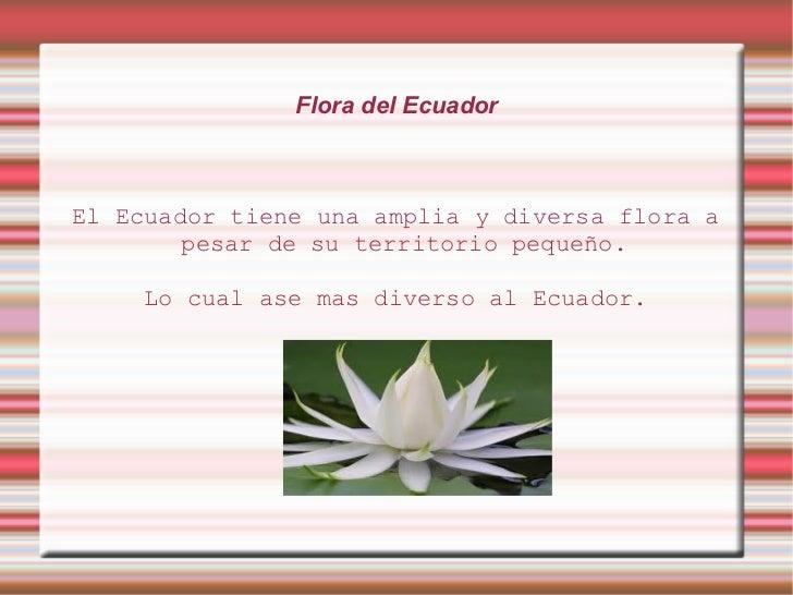 Flora del EcuadorEl Ecuador tiene una amplia y diversa flora a        pesar de su territorio pequeño.     Lo cual ase mas ...