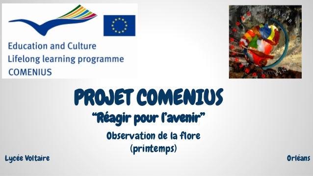 """PROJET COMENIUS """"Réagir pour l'avenir"""" Observation de la flore (printemps) OrléansLycée Voltaire"""