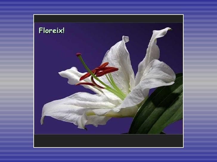 Floreix!