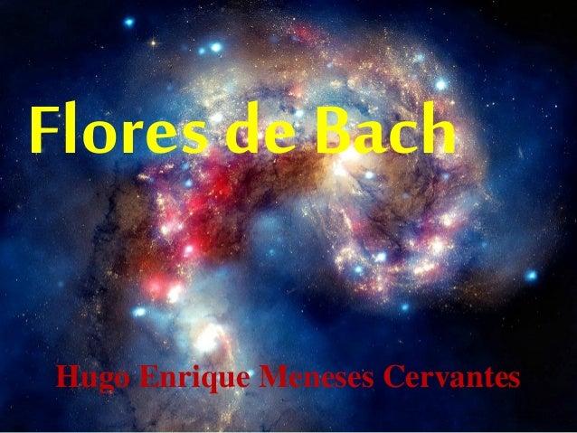 Flores de Bach Hugo Enrique Meneses Cervantes