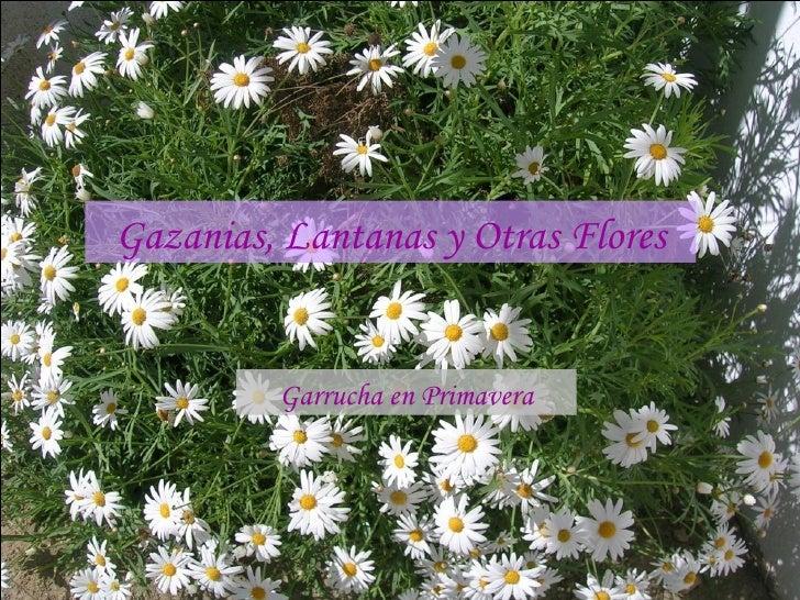 Gazanias, Lantanas y Otras Flores Garrucha en Primavera