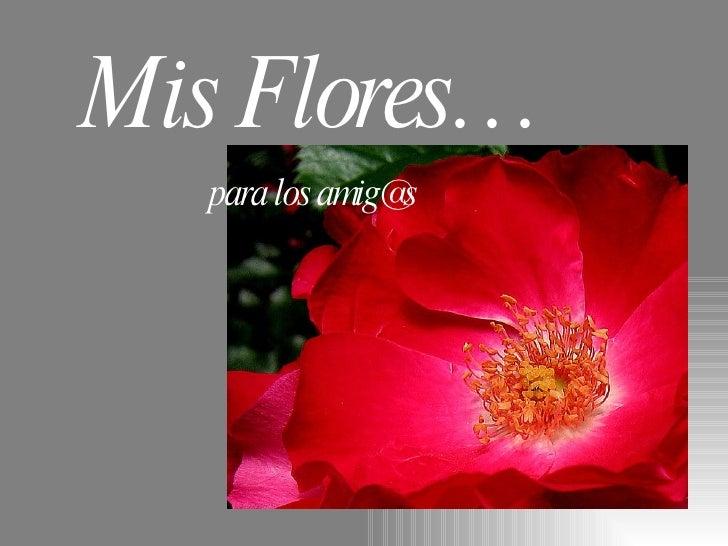 Mis Flores… para los amig@s