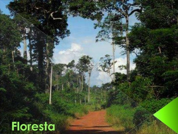 Floresta<br />