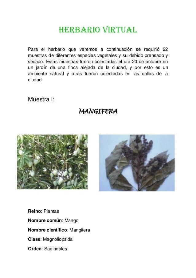 HERBARIO VIRTUALPara el herbario que veremos a continuación se requirió 22muestras de diferentes especies vegetales y su d...
