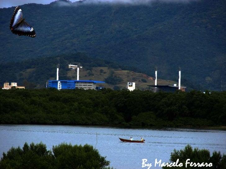 Florianópolis Manguezal