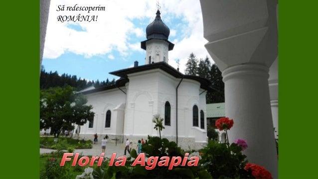 Flori la Mănăstirea Agapia