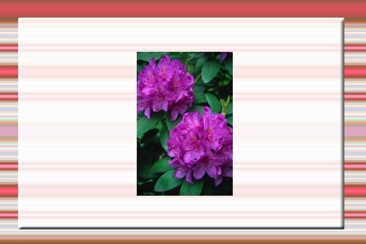 Flors I Altres