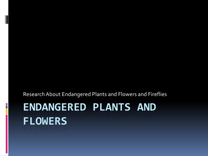 Endangered Plants and flowers<br />Research About Endangered Plants and Flowers and Fireflies<br />
