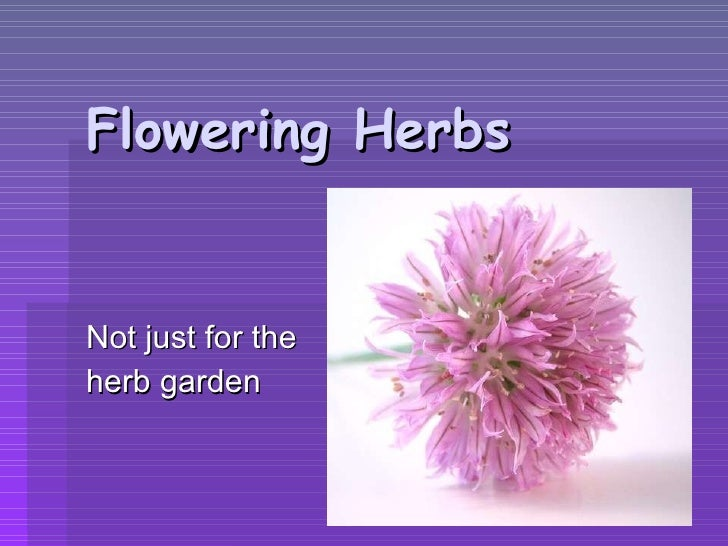 Flowering Herbs Not just for the  herb garden