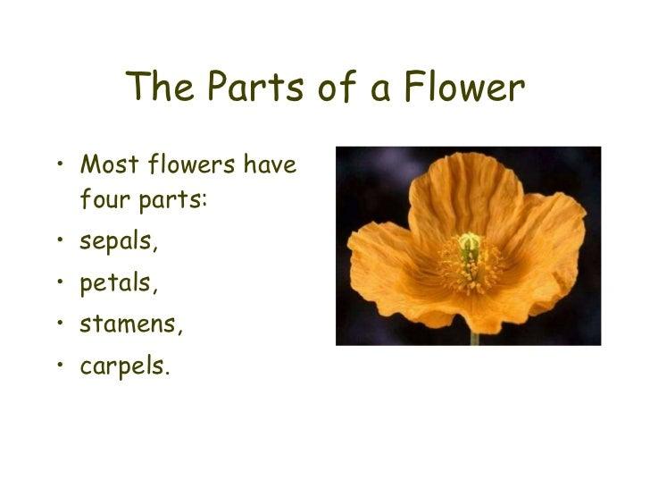 The Parts of a Flower <ul><li>Most flowers have four parts: </li></ul><ul><li>sepals, </li></ul><ul><li>petals, </li></ul>...