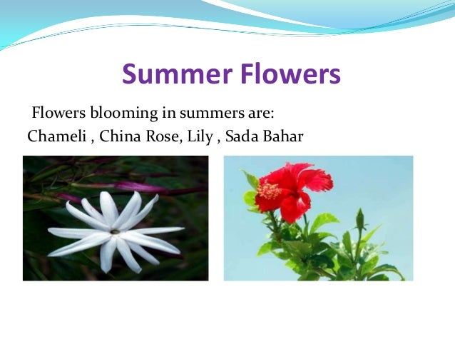 Flowers ppt by aditya sharma for What flowers are in season