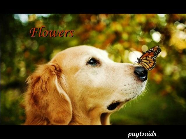 Flowers          puytsaidr