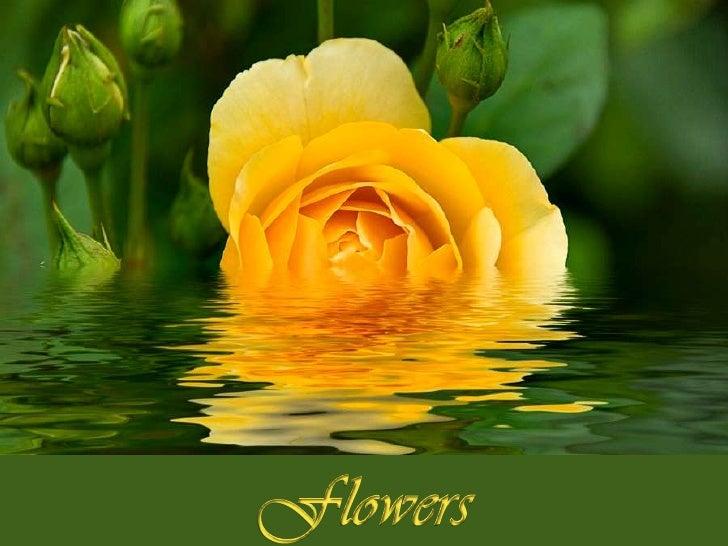 Flowers<br />