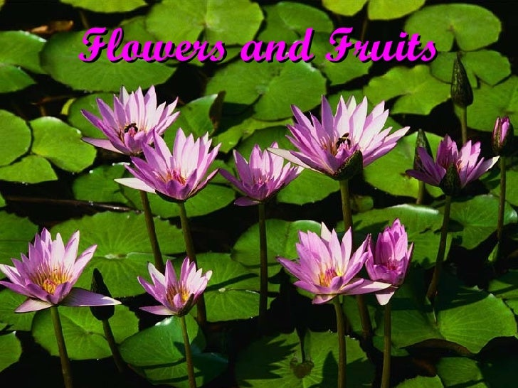Flowers and Fruits - An Overview
