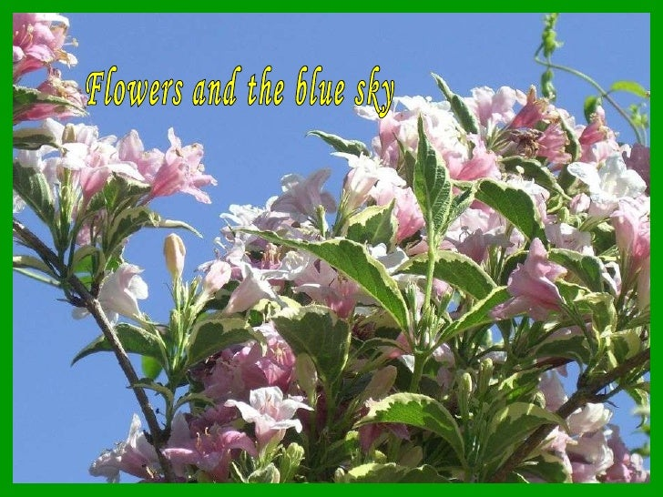 Flowers and the blue sky