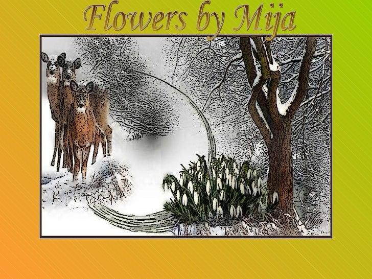 Flowers By Mija  Ildy